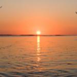 nepo sunset